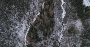 Taiga siberiano del cedro, Altai, Rusia almacen de video