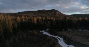 Taiga siberiano en la puesta del sol, Altai, Rusia 1 del cedro metrajes