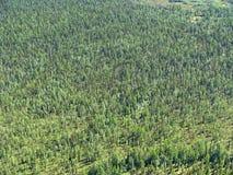 Taiga siberiano - vista aerea Fotografia Stock Libera da Diritti