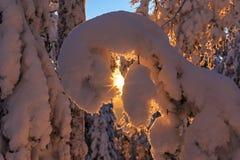 Taiga skogvinter Royaltyfri Foto