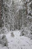 Taiga after snowfall Royalty Free Stock Photos