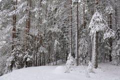 Taiga after snowfall Royalty Free Stock Photo