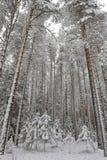 Taiga after snowfall Royalty Free Stock Photography