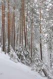 Taiga after snowfall Stock Photography