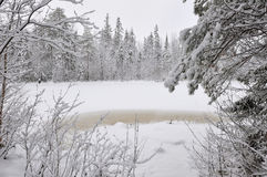 Taiga after snowfall Royalty Free Stock Images