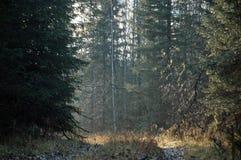 Taiga, sourd Sibérie photographie stock libre de droits