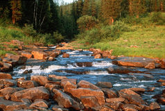 Taiga stream Royalty Free Stock Photo