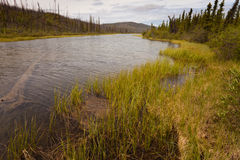 Taiga wetland. Pond and wetland in boreal forest Royalty Free Stock Photos