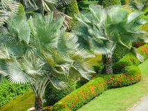 Tailândia, árvores tropicais Fotografia de Stock