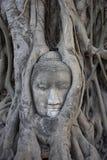 TAILÂNDIA, Ayutthaya, estátua de Buddha Fotos de Stock Royalty Free