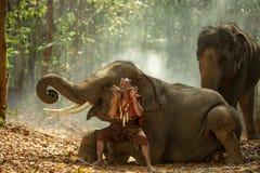 Tailândia o mahout está jogando o secador com os elefantes de tailandês Fotos de Stock Royalty Free