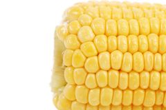 Tail of boiled corn. Back Stock Image