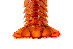 Tail of cooked crayfish closeup on white background Stock Photography