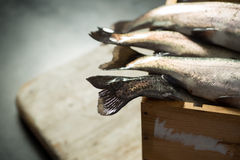 Tail Fins of Fresh Rainbow Trout in a Wooden Crate. Tail fins of rainbow trout in a wooden crate Royalty Free Stock Photo