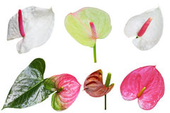 Tail Flower Set stock photography