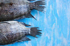 Tail Tilapia fish. On blue wooden background royalty free stock photography