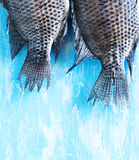 Tail Tilapia fish Royalty Free Stock Image