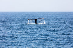 Tail of Whale, Cape Cod Stock Photos