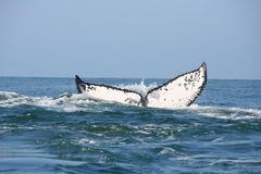 Tail of a whale in the ocean Stock Photo