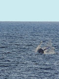 The tail of the whale Royalty Free Stock Photos