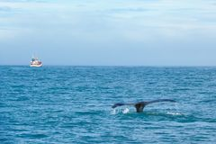 Tail of whale in sea on background of ship with tourists.  Iceland stock photo