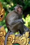 ` Tailandés s del Macaque del templo que espera un almuerzo libre Fotos de archivo libres de regalías