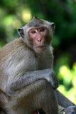 ` Tailandés s del Macaque del templo que espera un almuerzo libre Foto de archivo libre de regalías