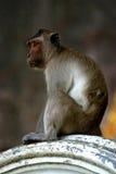 ` Tailandés s del Macaque del templo que espera un almuerzo libre Imagen de archivo libre de regalías
