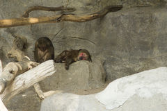 Tailand.Pattayya.Zoopark. Stock Image