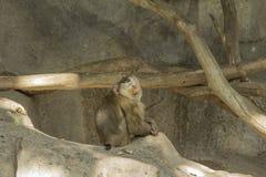 Tailand.Pattayya.Zoopark. Royalty Free Stock Image