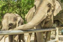 Tailand.Pattayya.Zoopark Royalty Free Stock Photos