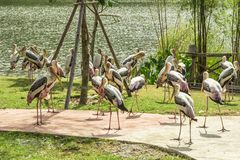 Tailand.Pattayya.Zoopark Royalty Free Stock Images