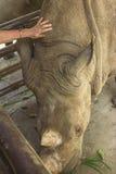 Tailand.Pattayya.Zoopark Stock Photo