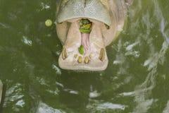 Tailand.Pattayya.Zoopark Royalty Free Stock Photo