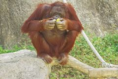 Tailand.Pattayya.Zoopark Stock Images