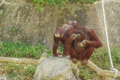 Tailand.Pattayya.Zoopark Stock Image