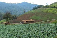 tailandia Fotos de archivo libres de regalías