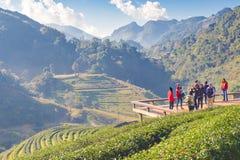Tailandia - 2 de enero de 2016: Los turistas gozan el hacer turismo en 2000 la plantación de la terraza del té, montaña de Doi An Foto de archivo libre de regalías