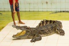 Tailandia, demostración del parque zoológico de cocodrilos en la granja y el parque zoológico del cocodrilo Fotos de archivo