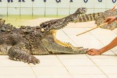 Tailandia, demostración del parque zoológico de cocodrilos en la granja y el parque zoológico del cocodrilo Fotos de archivo libres de regalías