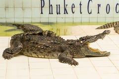Tailandia, demostración del parque zoológico de cocodrilos en la granja y el parque zoológico del cocodrilo Fotografía de archivo