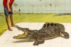Tailandia, demostración del parque zoológico de cocodrilos en la granja y el parque zoológico del cocodrilo Imagenes de archivo