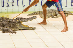Tailandia, demostración del parque zoológico de cocodrilos en la granja y el parque zoológico del cocodrilo Foto de archivo libre de regalías