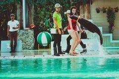 TAILANDIA KOH SAMUI el jugar del león del ‹del †del ‹del †del mar del 8 de abril de 2013 Fotos de archivo