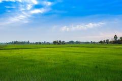 Tailandia, Nan Province, campo agr?cola, Asia, granja imagen de archivo