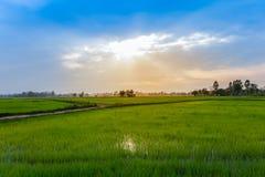 Tailandia, Nan Province, campo agr?cola, Asia, granja fotos de archivo libres de regalías