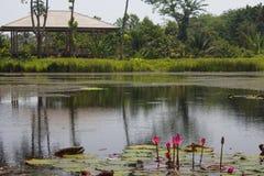 Charca de Lotus Imagenes de archivo