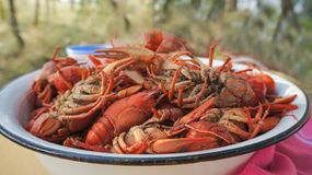 Tailed boiled crayfish, food from river dwellers royalty free stock image