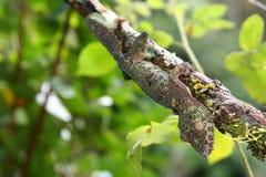 tailed geckoleaf arkivfoto