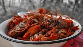 Tailed hirvió los cangrejos, comida de habitantes del río imagenes de archivo